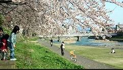犀川河川敷一層清掃を実施します! @ 犀川河川マリンポート金沢さん手前 | 金沢市 | 石川県 | 日本