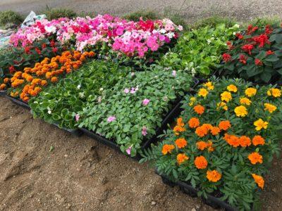 犀川河川敷にて花の苗植えボランティアを行いました