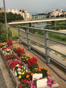 犀川河川敷にて花の苗植えボランティアを行います